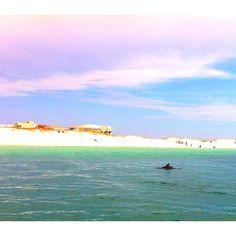 Dolphin Tour in Pensacola, Florida
