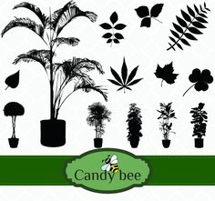 Plant & Leaves Silhouette digital Clip art- Buy 1 get 1 Free, Buy 2 get 2 Free, Buy 3 get 3 Free! by CandyBeeDesigns on Etsy Silhouette Clip Art, Tree Silhouette, Vector Design, Graphic Design, Plant Vector, Bee Design, Scrapbook Supplies, Vector Graphics, Handmade Crafts