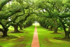 Nature is uncompleted without green color. You can believe the statement by viewing the photos of beautiful green nature. Beautiful World, Beautiful Places, Beautiful Pictures, Nature Pictures, Forest Pictures, Nature Images, Amazing Places, Trees Beautiful, Beautiful Sunset