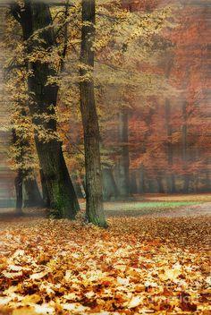✯ Foggy Autumn Day