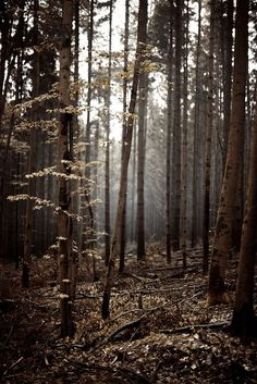 Reminds me of being a little girl, being in the deep woods with my Dad <3 I can still remember the mossy smell of the wet ground and trees <3