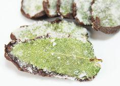 Les Feuilles de Menthe Cristallisées au Chocolat