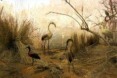 Natural History Museum in Heraklion Crete!!!