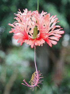 10 Pins de Flores para conferir - Caixa de entrada - Yahoo Mail