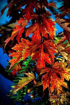 Fall Reds