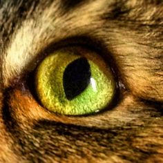 They are like little green planets  #hodor #cat #greeneyes #closeup #feline #meow #green #tabby # # #❤️ # # #catsofinstagram #catoftheday #catlovers #cat_features #purr #beautiful #furries #furbaby #iris #catsofig  #hodorthecat #handsome #planets