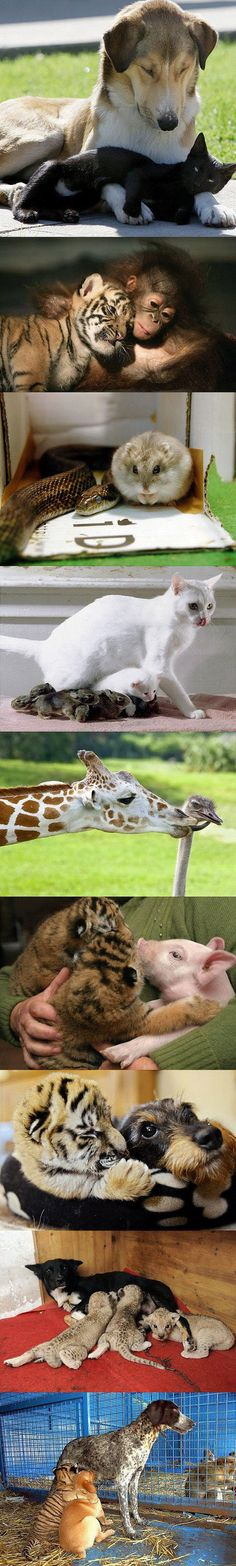 Unexpected Friendships !!!  Wouldn't it be lovely if  humans could be the same!!!!!