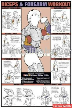 Biceps work out