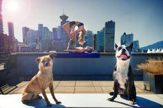 dogs + yoga