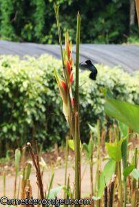 #Colibri, parc de #Valombreuse, #Guadeloupe Secret Places, Pathways, Park, Landscape