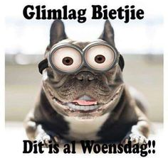 Lekker Woensdag 28 Dae Dieet, Lekker Dag, Afrikaanse Quotes, Goeie More, Fb Covers, Friend Pictures, Good Morning Quotes, Picture Quotes, Minions