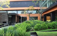 Imagem 23 de 39 da galeria de Paisagismo no Campus Corporativo Coyoacán / DLC Arquitectos + Colonnier y Asociados. Cortesia de DLC Arquitectos