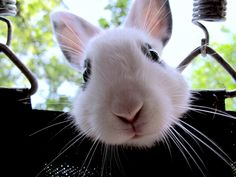 bunny face автор Jordan Graham на 500px