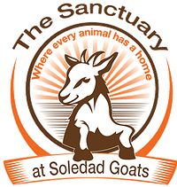 Where better to buy vegan goat cheese, but a farm animal sanctuary?!