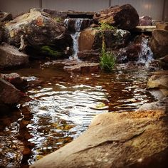 New Waterfall just plugged in near Dyersburg, TN I ❤️ Waterfalls! Koi Ponds, Water Gardens, Waterfalls, Tennessee, Jackson, Nursery, Patio, Outdoor, Day Care