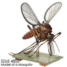 蚊の解剖模型 50倍大アカイエカ模型 7分解/B SZoS48S5 ソムソ動物模型 SOMSO