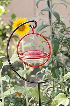 """Love this """"Love Hummingbirds? We do too :) You'll love this Best Small Glass Hummingbird Feeder with Red Perch. It Attracts Hummers Like Crazy and its the perfect gift idea for moms, grandmas, women, hummingbird lovers or even yourself :) #hummingbird #hummingbirds #hummingbirdfeeder #hummingbirdgifts #WeLoveHummingbirds Glass Hummingbird Feeders, Humming Bird Feeders, Cherry Valley, Garden Stakes, Wasp, Faux Flowers, Our Love, Outdoor Gardens, Clear Glass"""