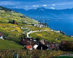 Lavaux Vineyard Terraces: The Swiss Wine Route - Switzerland Tourism Vevey, Swiss Travel, European Travel, Lausanne, Switzerland Tourism, Selfies, Haus Am See, Lake Geneva, Wine
