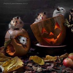 Hallowen by Elena Eremina on 500px
