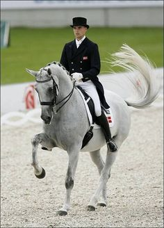 Dressage favorite - Blue Hors Matine Plus Blue Horse, White Horses, Horse Love, Pretty Horses, Beautiful Horses, Dressage Horses, Race Horses, English Riding, Show Jumping