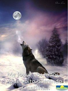 lobos e lua !