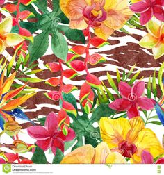 exotic flowers of africa - - Yahoo Image Search Results