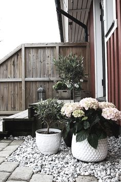 Lovely combination of materials and textures - potted hydrangea & olive tree, silvered decking & pebbles