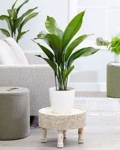 Tuonenkielo Indoor Plants, Green Bubble, Decor, Side Table, Table, Inspiration, Furniture, Green, Home Decor