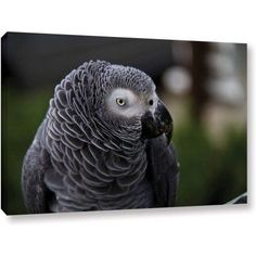 Lindsey Janich Parrot Gallery-Wrapped Canvas, Size: 24 x 36, Green