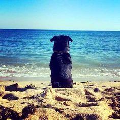 7 claves para saber si tu perro es feliz - Taringa!