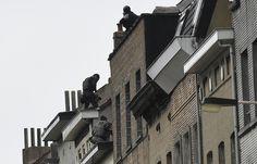 La police belge traque les complices des terroristes à Molenbeek, le 16 novembre.