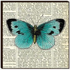 butterfly drawing on a old book
