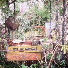 リノベ終了したのは朝方^^;なんと外は穏やかでめちゃめちゃ暖かい~♪昼に目覚めるとは損した気分です(笑)なんかしよっと(*^-^*) #穏やか#ガーデン#ガーデニング#ナチュラルガーデン#ドリンクケース#ペプシ#コカ・コーラ#古道具