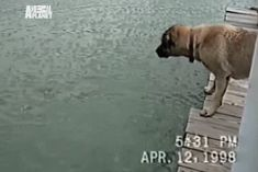LMAO #45 - New Cool gifs gallery - 37 gifs - Page 5 of 7