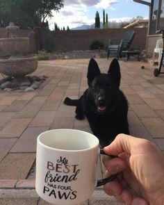"""1,042 kedvelés, 12 hozzászólás – K-9 Kai (@k9_kai) Instagram-hozzászólása: """"Coffee before our walk this A.M.....!! ☕️ #k9kai #kaisretiredlife #k9life #k9strong #coffee…"""""""