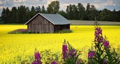 COUNTRY LIFE | Country Life in the Land of a Thousand Lakes - Scanam World Tours