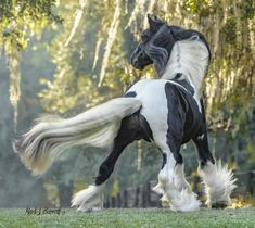 :: Square Crop :: Horses Stock Photography, Equine Images and Video Production by Mark J. Cute Horses, Beautiful Horses, Horse Training Tips, Horse Tips, Gypsy Horse, American Saddlebred, Types Of Horses, Horse Saddles, Western Saddles