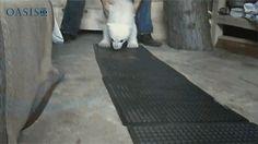 22 walgelijk cute dieren | Flabber