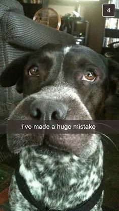 26 Snapchats From Your Dog. This looks just like Beau