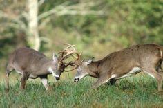 Whitetail Deer Hunting - Secrets - Tips - Tricks - Bowhunt - Trophy Bucks