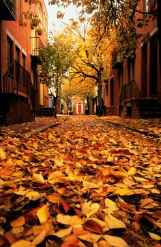 The colors of the leaves are amazing! - Red Door, Center City, Philadelphia