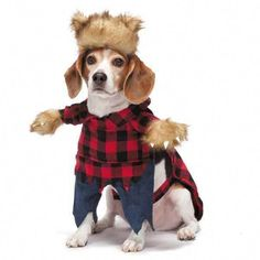 Home & Garden Funny Pet Cat Dog Costume Clothes Chinese Lion Dance Suit For French Bulldog Small Medium Dogs Corgi New Year Dress Up Apparel Commodities Are Available Without Restriction