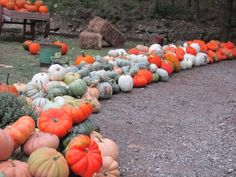 10+ Best Pumpkin Patches to Visit This Fall 2021 (with Photos) – Trips To Discover Black Pumpkin, Pumpkin Farm, No Carve Pumpkin Decorating, Pumpkin Carving, Pumpkin Patch Pictures, Pick Your Own Pumpkins, Best Pumpkin Patches, Leaves Changing Color, Fruit Roll Ups