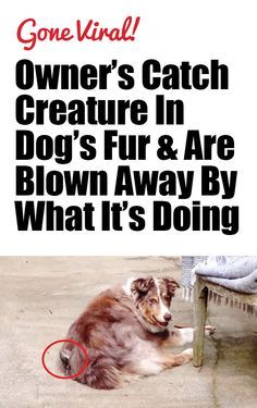 They Saw Something Moving In Their Dog's Fur & Started Recording. You Won't Believe What They Captured!