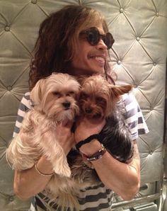 Steven Tyler & his dogs Butch Cassidy and the Sundance Kid Rock N Roll, Steven Tyler Aerosmith, Elevator Music, Sundance Kid, Joe Perry, The Jam Band, Liv Tyler, Butches, American Idol