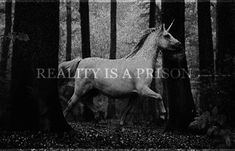 Reality Is A Prison
