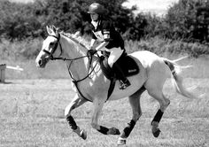 Picasso 19 years old on seahorse atlantic, double clear in all his one day events last year. Marine Environment, Seaweed, Picasso, Pony, Dog Cat, Events, Horses, Cats, Natural