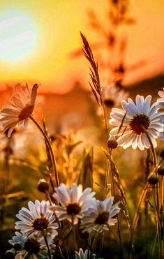 Flowers https://za.pinterest.com/OnlyVIP/