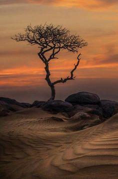 Arabian Desert -Saudi Arabia
