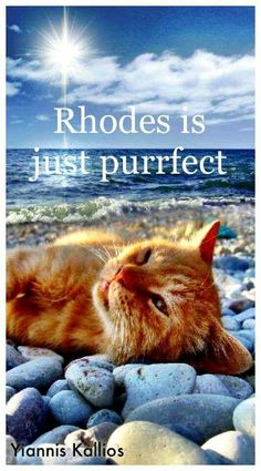 I love Rhodos and cats